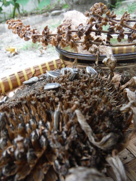 Penjemuran beragam benih. Foto: Bekabuluh.